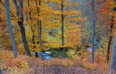 Lasy bukowe w dolinie Brzeźnickiej Węgorzy