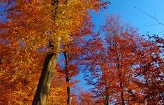 Jesień w okolicach Donatowa