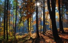 Las bukowy w pobliżu Imienka