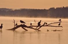 Pojezierze Drawskie to ostoja ptactwa wodnego