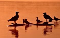 Ptasi poranek nad jeziorem Żerdno