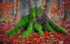 Jesień w karsiborskich lasach