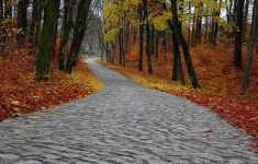 Droga z Karsiboru do Klęcka