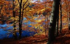 Jesień nad jeziorem Małe Dąbie