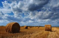 Krajobraz rolniczy gminy Brzeżno