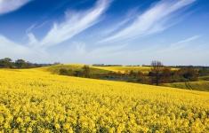 Wiosna w okolicach Brzeżna