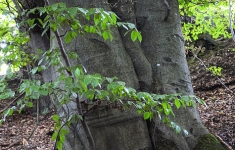 W lasach Szwajcarii Połczyńskiej